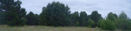 Photograph Bungana Reserve Panorama